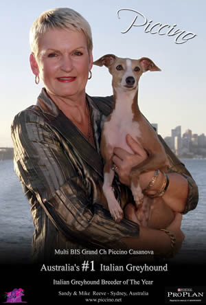 Piccino Italian Greyhounds, Australian Show Kennel of the